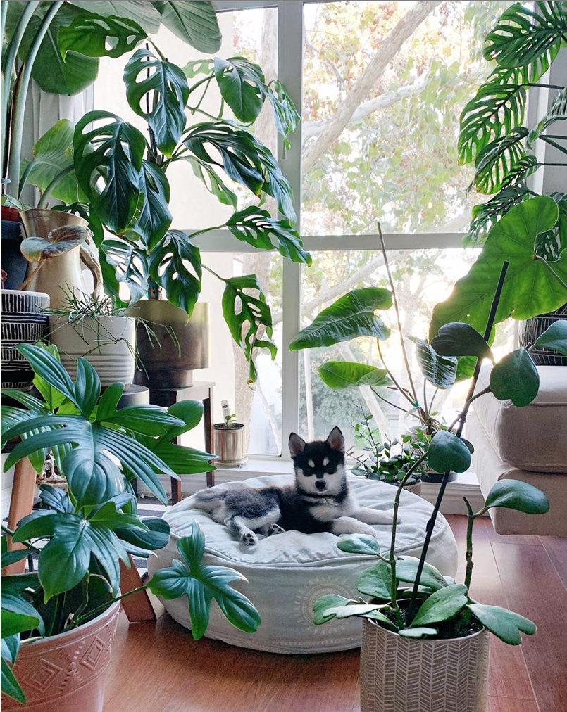 Decor And Plants Shelves Ideas